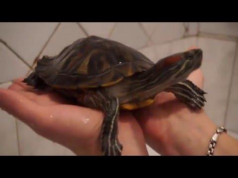 Вопрос: Как согреть черепаху?