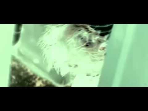 Splinter Movie Trailer Excellent.flv