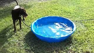Funny dog finds jeffy scary