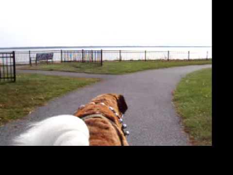 Fox Point Park, November 2014