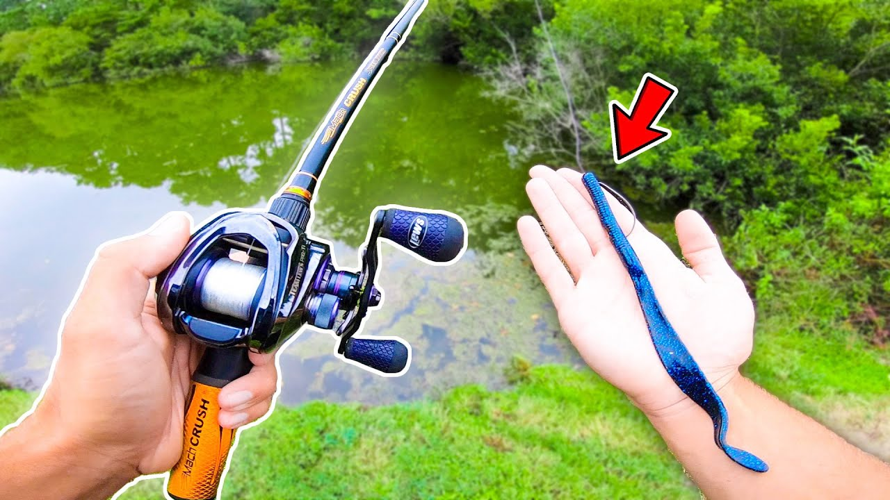 Searching for GIANT Bass w/ BIG Worms! (Pond Fishing)