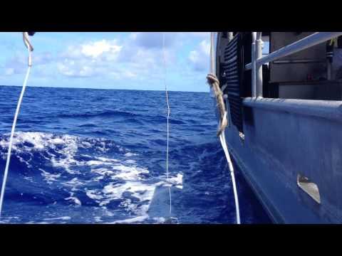 Dangling Offshore in Hawaiian Waters
