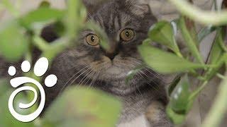 Какие Растения Опасны Для Котиков?( Все О Домашних Животных