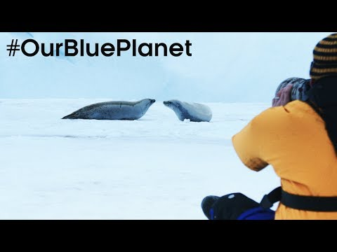 Filming On Thin Ice In Antarctica #OurBluePlanet - BBC Earth