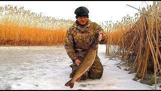 Жерлицы. Рыбалка на щуку. Зимняя разведка по щучьим местам. Оставил жерлицы на ночь.