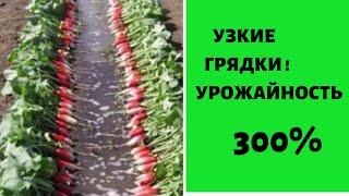 Узкие грядки - УРОЖАЙНОСТЬ 300 % !!!