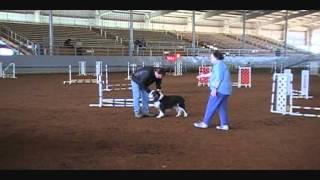 Tipsy (hillslik Barjack Ax Axj Mxp Ajp Ofp) Retired Dog Glory Agility Run