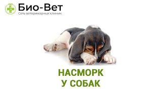 Насморк у собак. Ветеринарная клиника Био-Вет.