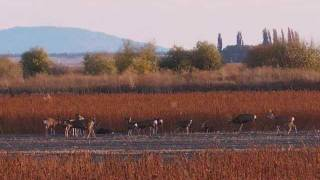 TULELAKE AND LOWER KLAMATH NATIONAL WILDLIFE REFUGES NOV  2011 .wmv