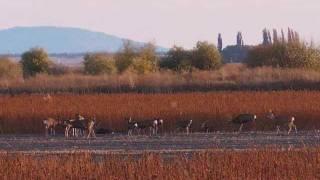TULELAKE AND LOWER KLAMATH NATIONAL WILDLIFE REFUGES NOV  2011 .wmv