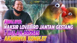 Download lagu KEPINCUT LOVEBIRD GESTANG | PROSES 7 BULAN LB GENDAM AKHIRNYA KONSLET