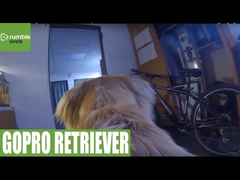 GoPro captures dog's activities while owner is away