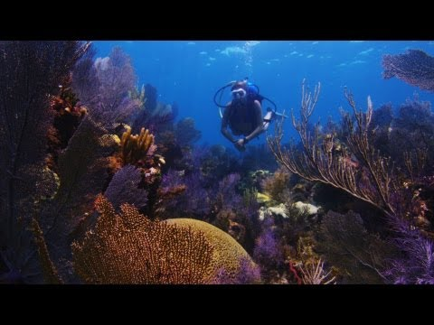 Florida's Coral Reefs Face Altered Oceans