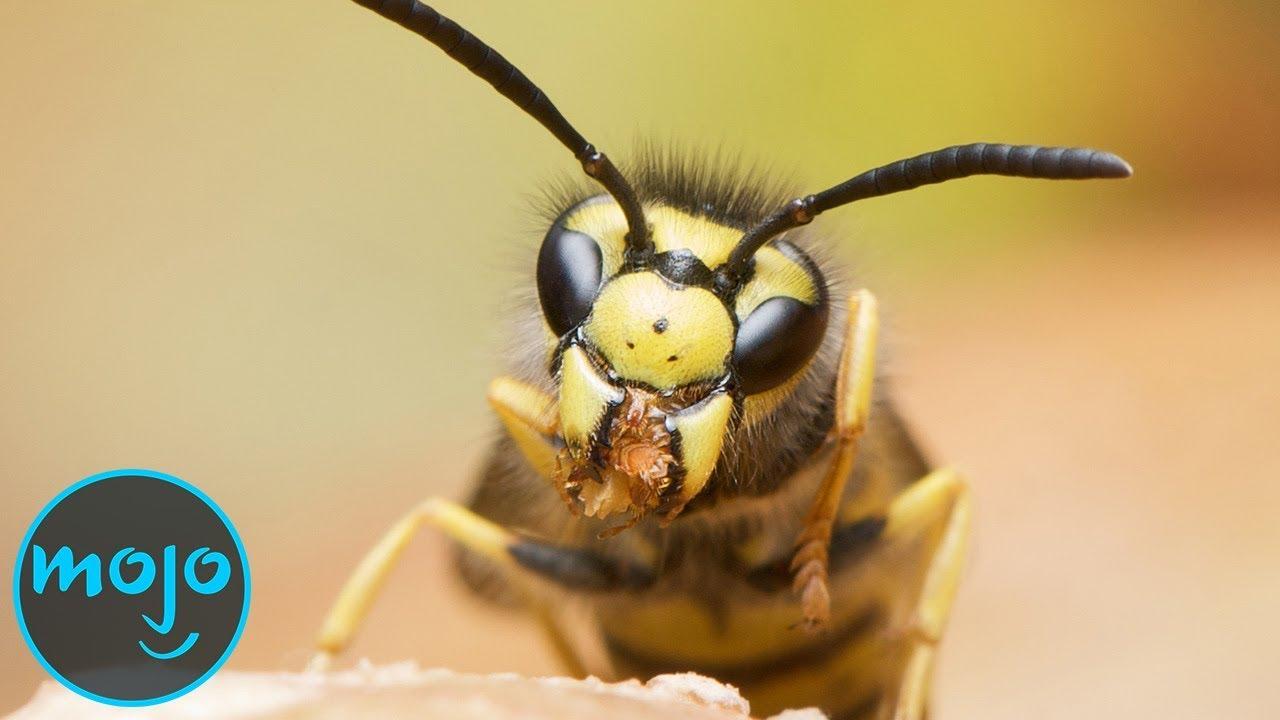 10-те најсмртоносни инсекти