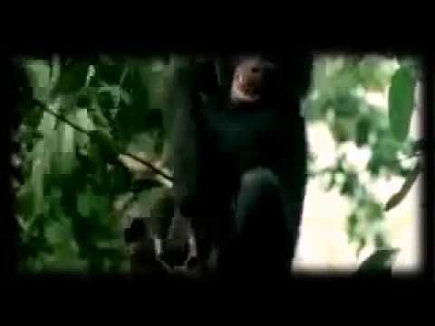 belaya-ebutsya-video