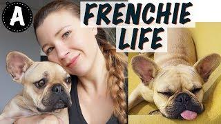 FRENCH BULLDOG TIPS