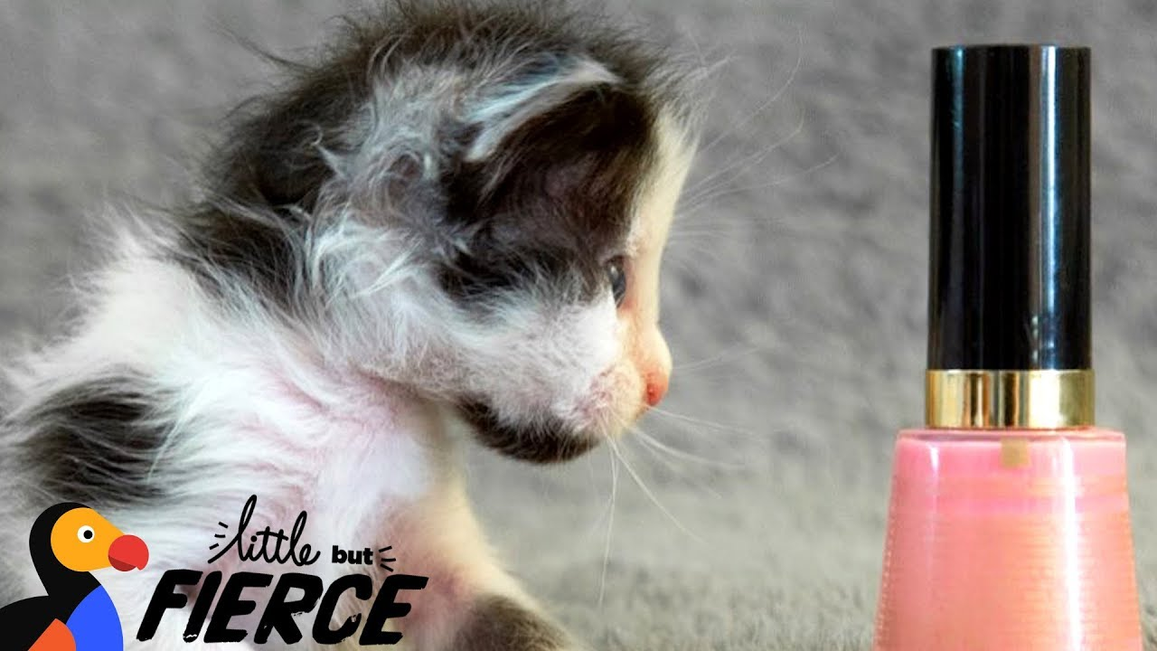 Watch This Micro-Mini Kitten Grow Up - THUMBELINA | The Dodo Little But Fierce