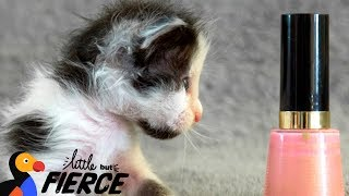 Watch This Micro-Mini Kitten Grow Up - THUMBELINA