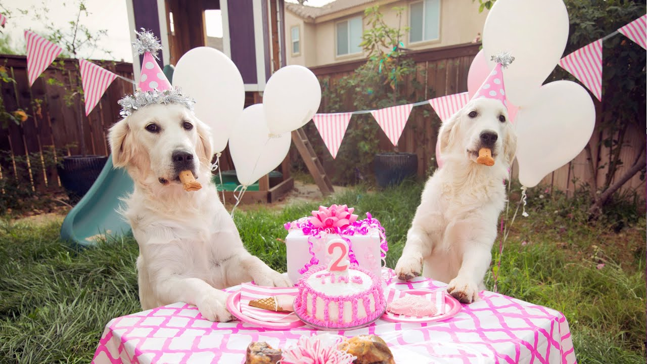 Golden Retriever Birthday Party Youtube