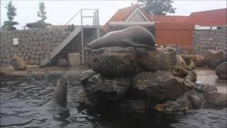 Steller Sea Lion Action | Dolfinarium Harderwijk