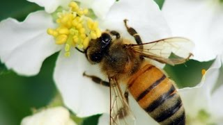 New Neonicotinoid Research On Queens & Wildflowers