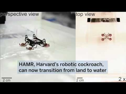 Swimming cockroach-inspired robot