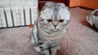 Кот марсик впервые на Ютубе :)
