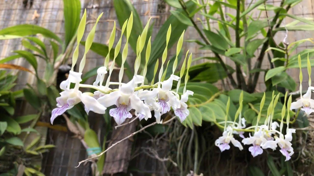 Exploring Kawamoto Orchid Nursery You