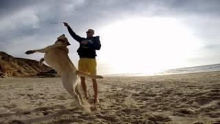 Labrador at the beach - gopro 3+