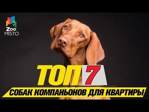 Топ 7 пород собак компаньонов для квартиры\Top 7 companion dog breeds for the apartment