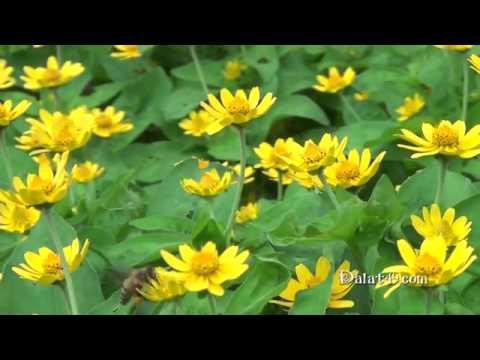 ▶ Ong bướm trong vườn hoa Thiền Viện Trúc Lâm Đà Lạt