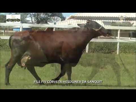 LOTE 20 FILE FIV CORVETA HESDLINER DA SANQUIT