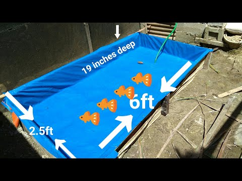 How to make Pond RuSH using Used Woods and Bamboo Stick , for mollies , guppies , goldfish DIY POND
