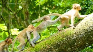 Awesome! 4 Little Small Baby Monkeys Fighting Big One, Very Nice Baby Playing!