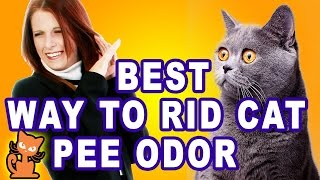 Get Rid of Cat Pee Smell: Insider secrets to getting rid of cat urine odor.