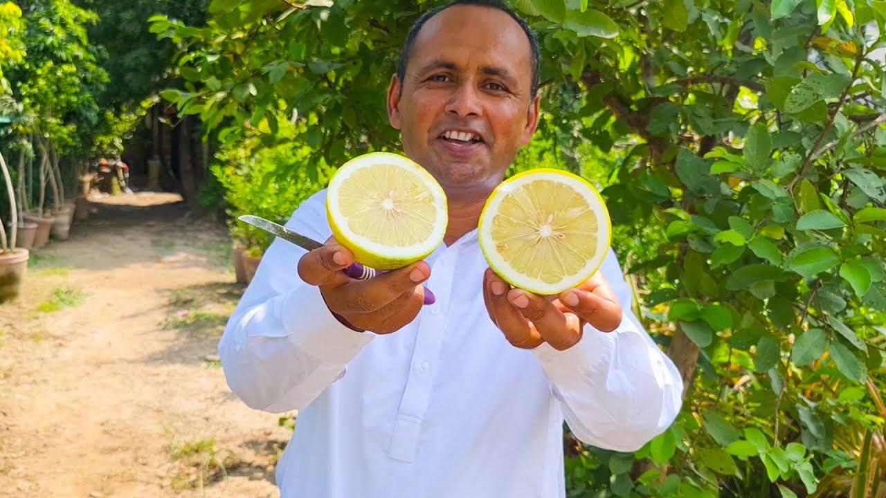 BAGH LAGAYA | Garden Cultivation | 20 Types Fruits Tree | Mubashir Saddique | Village Food Secrets