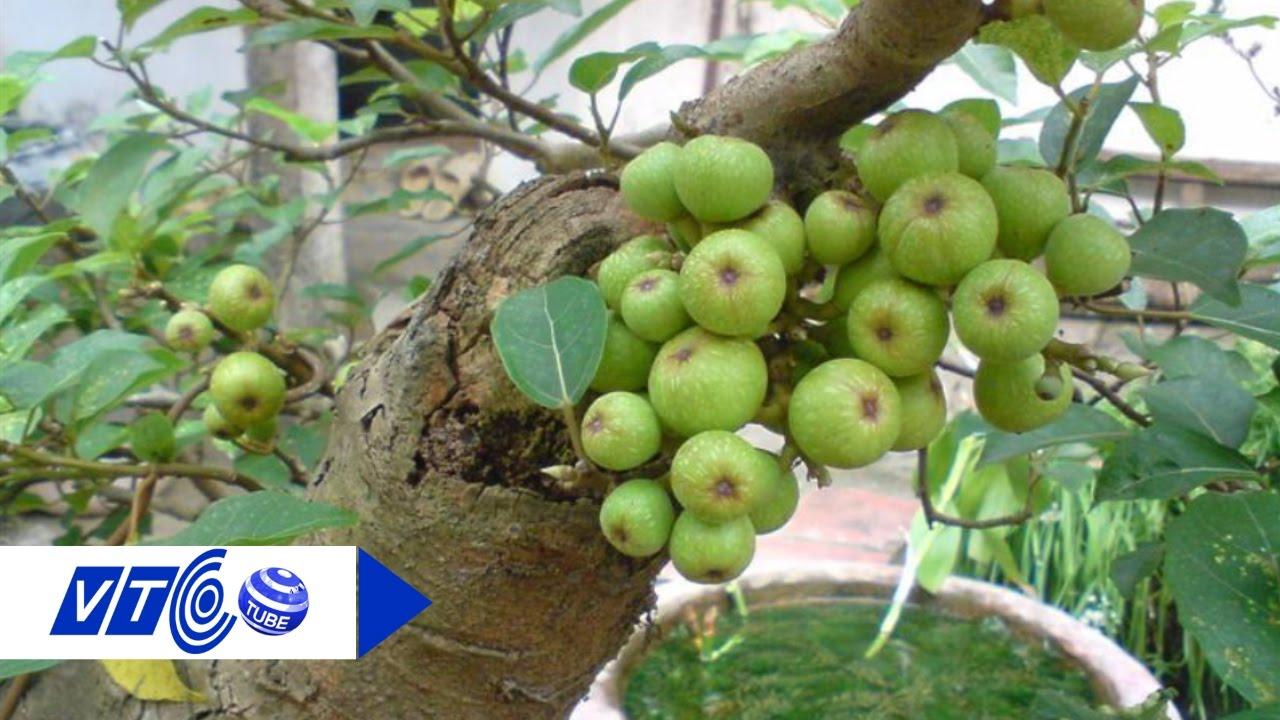 Chọn cây xanh xua tà, hút lộc cho gia chủ | VTC