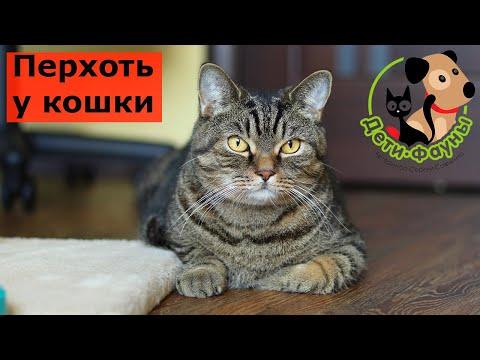 Вопрос: Насколько есть у кошки инстинкт самосохранения от вредных веществ?