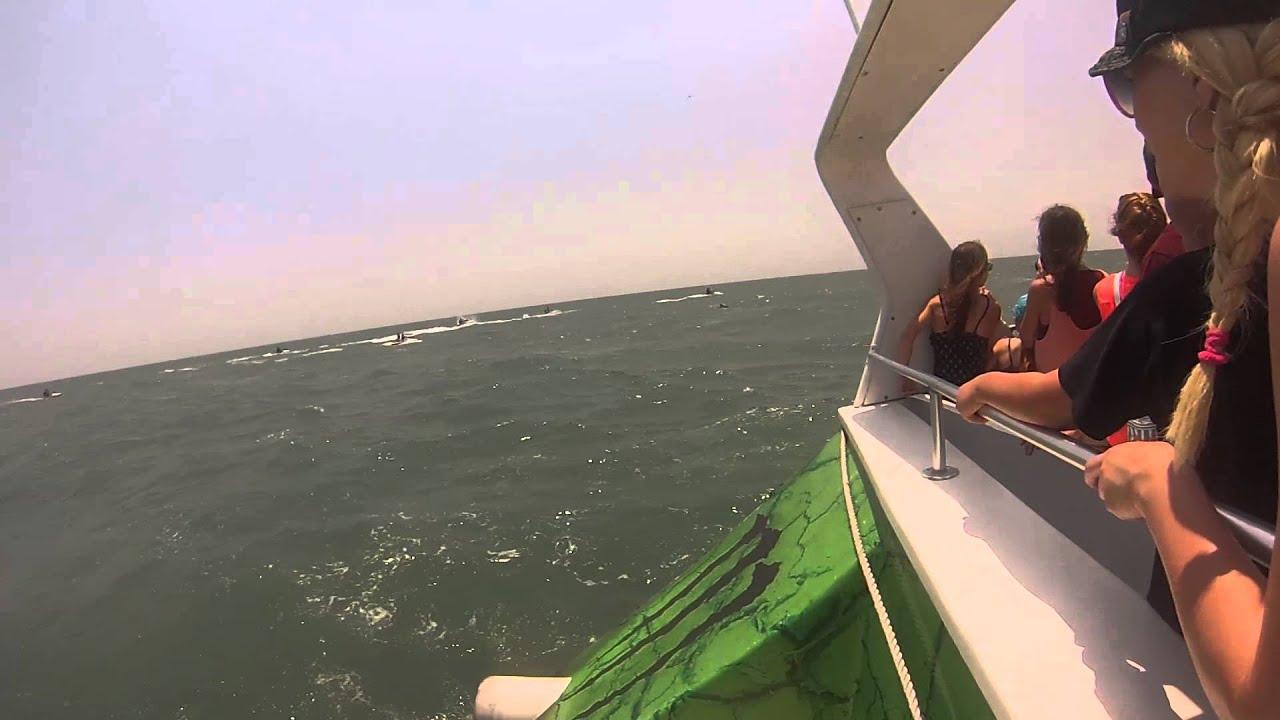 Sea Thunder Dolphin Tour - North Myrtle Beach !!! 07/09/14 - YouTube