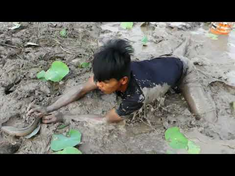 Best Mud Fishing And Save Fish - Unbelievable Fishing In Dry Season