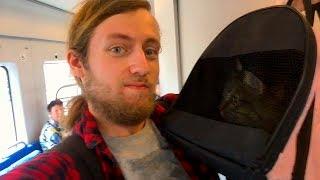 Впервые везу кота на поезде (он плакал)