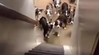Имена собак