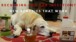 Stop Recurring Dog Ear Infections
