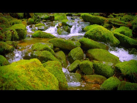 Mountain Stream Water Sounds White Noise For Sleep, Focus, Studying | 10 Hours 4K