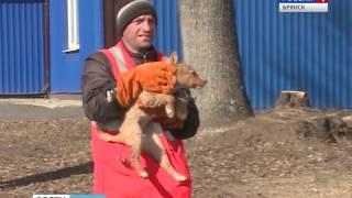 Стерилизация собак в Брянске