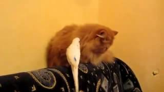 Смешные ролики про животных