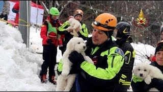 Three puppies found alive under rubble 5 days after Italy avalanche