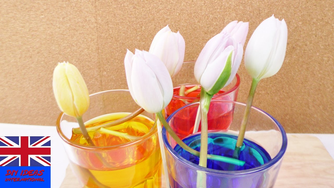 EXPERIMENT: CHANGING TULIP COLOURS | how to dye flowers with food ...