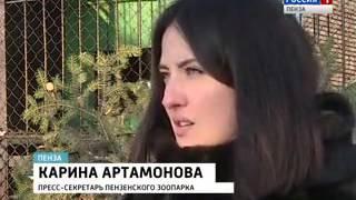ГТРК Пенза Видео Пензенской волчице Карри привезли жениха из
