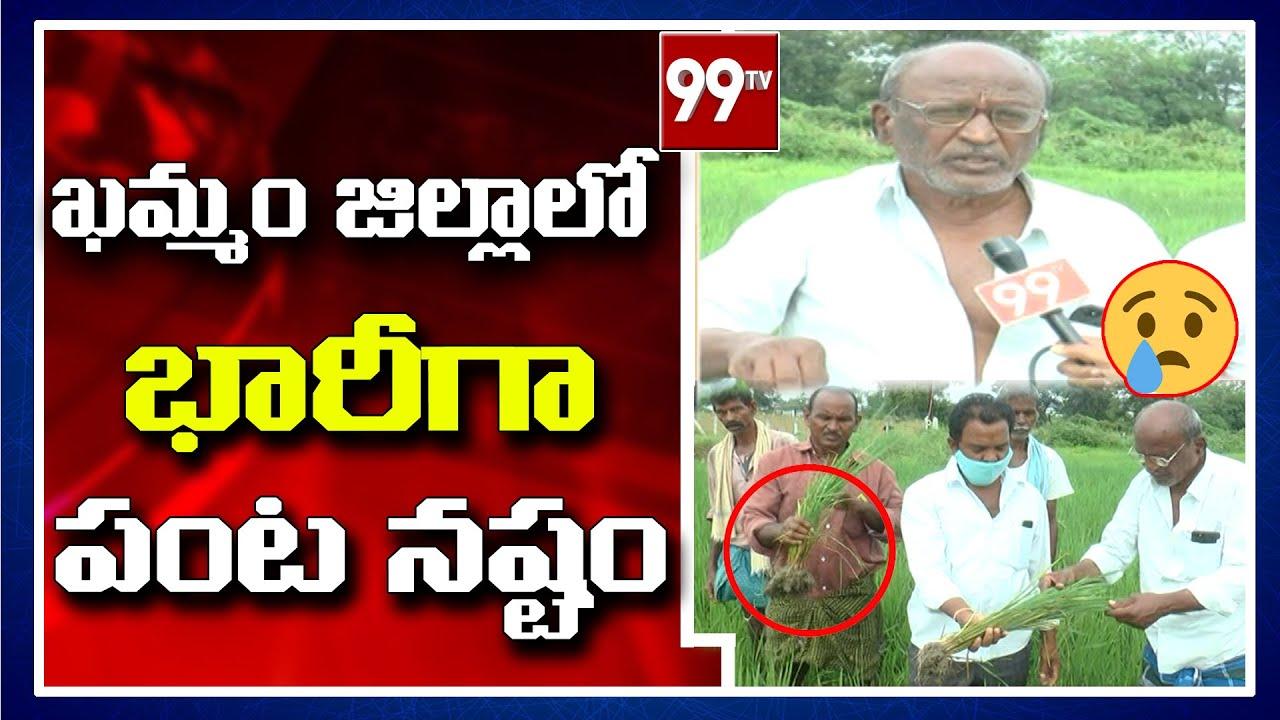 ఖమ్మం జిల్లాలో భారీగా పంట నష్టం   99TV Telugu